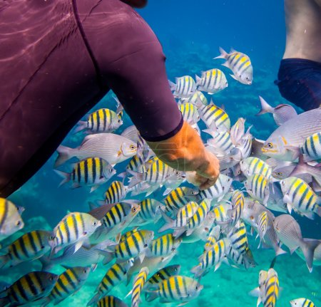 Tropical Coral Reef.Man feeds the tropical fish.