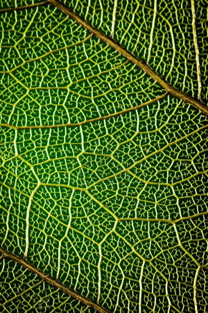 abstract background green leaf close-up