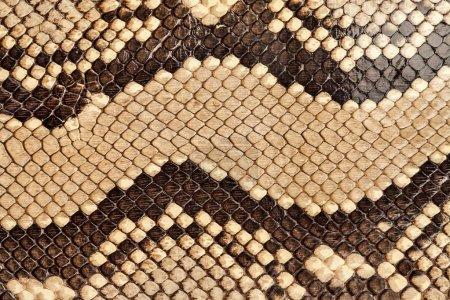 Snake skin.