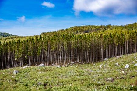 Photo pour Déforestation en Norvège - image libre de droit