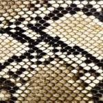 Snake skin python for background...