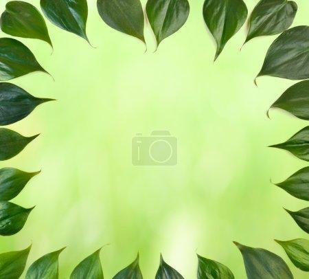 Foto de Hojas de color verde fondo de borde de hoja - Imagen libre de derechos