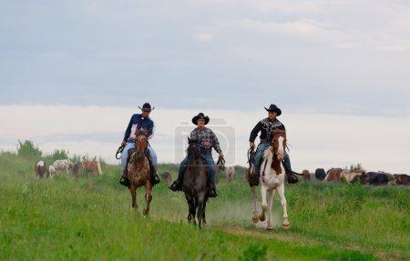 Cowboys drive horses