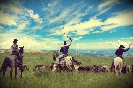 Three cowboys drive herd of horses