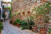 Plants in pots on narrow street