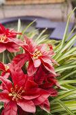 Dekorativní přirozené květ