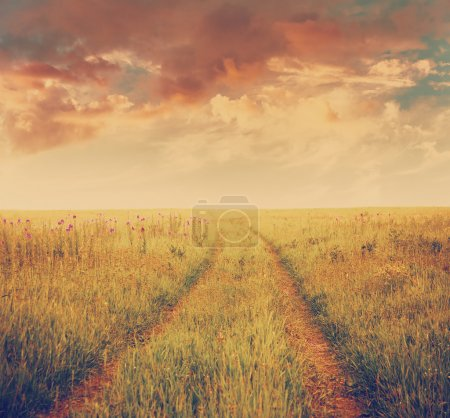 Sunset and summer field