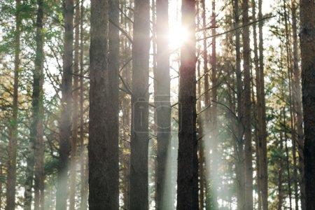 Foto de Hermosa puesta de sol en el bosque verde - Imagen libre de derechos