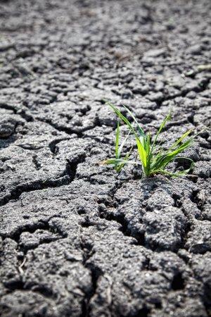 Photo pour Plante verte poussant à partir de terre fissurée - image libre de droit