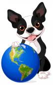 Boston Terrier holds the Earth