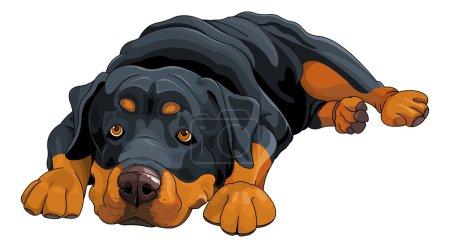 Illustration pour Illustration vectorielle de belle mignonne Rottweiler - image libre de droit