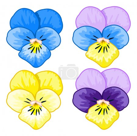 Illustration of pansy flowers