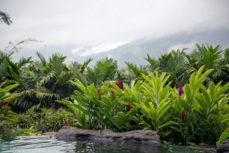 Photo pour COSTA RICA,THE SPRING RESORT AND SPA - MAY,27, 2014 - Pool with hot thermal water in a five star hotel The Springs Resort and Spa in Costa Rica, Central America Luxury Hotel with spectacular view of Arenal Volcano in Costa Rica, Central America - image libre de droit