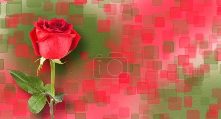 Bouquet of red roses with green leaves on the abstract backgroun