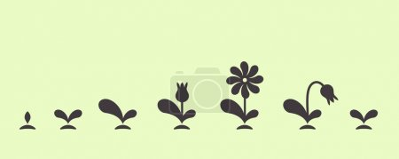 Vector green plant growing seed foliage flower set