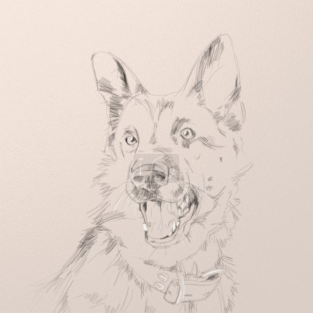 portrait of the german shepherd dog