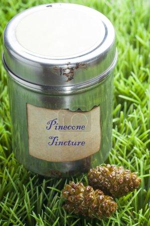 Pine cone tincture