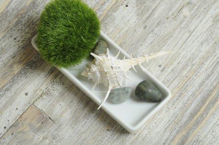 grass, stones and seashell