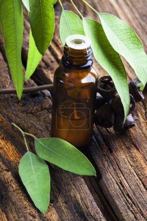 Photo pour Médecine traditionnelle : bouteille d'huile essentielle d'eucalyptus avec des feuilles et des graines sur fond de bois - image libre de droit