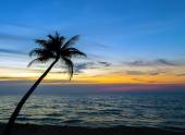 Palm trees on the beautiful sunset
