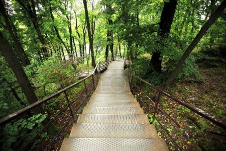 Photo pour Escalier dans le parc - image libre de droit