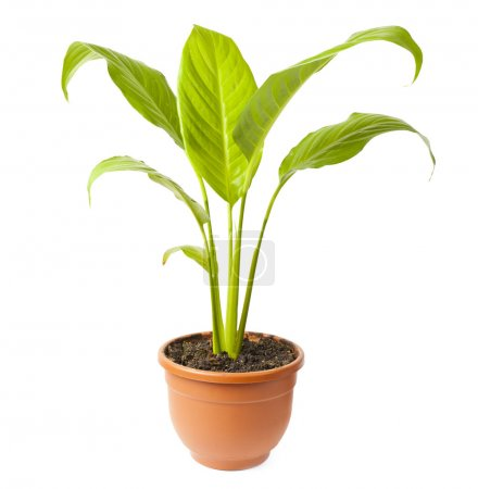 House plant in pot