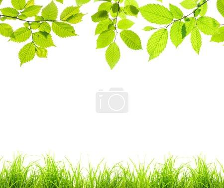 Photo pour Belle bordure de branches avec feuilles et herbe - image libre de droit
