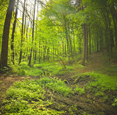 morning in green forest