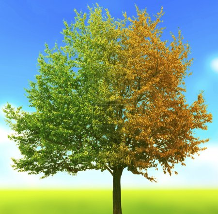 Tree with green and yellow leaves