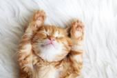 Rote Kätzchen