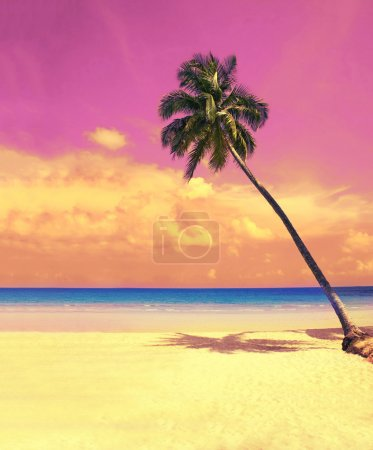Paradise nature, palm tree over white sand beach on the tropical