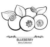 Stylized hand drawn black and white illustration of blueberry