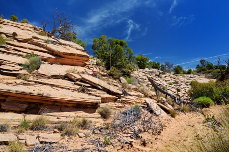 Photo for Stunning colorful sandstone formations of Yant Flat in Utah, USA - Royalty Free Image