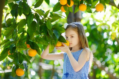 Photo for Adorable little girl picking fresh ripe oranges in sunny orange tree garden in Italy - Royalty Free Image