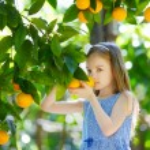 Adorable little girl picking fresh ripe oranges in...