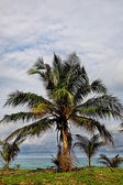 palm trees foliage