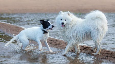 Group of dogs of different breeds playing on the seashore.