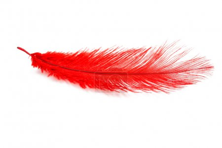 Red feather bird