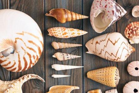 Seashells collection on wood