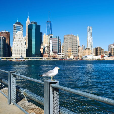 Seagull with Manhattan in background. Focus on the bird.