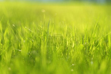 Green meadow in sunlight