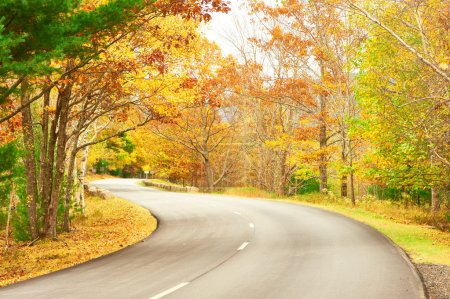 Photo for Autumn scene with road in forest - Royalty Free Image