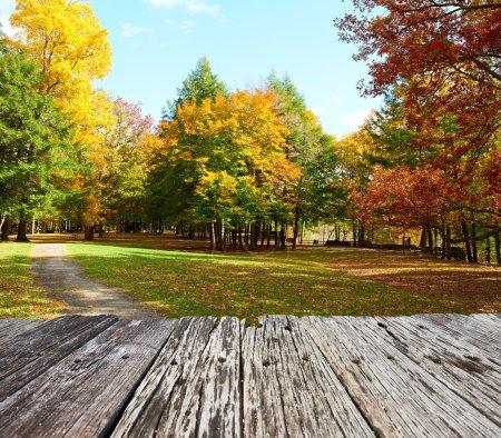 Autumn scene landscape