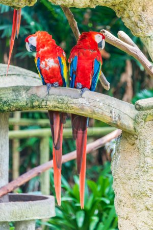 Photo for Colourful parrot birds sitting on the perch - Royalty Free Image