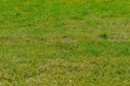 Photo for Close up of green grass for your background - Royalty Free Image