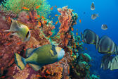 Colorful underwater reef with coral