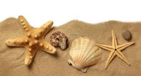 Starfish on Beach Sand