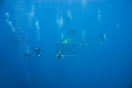 Scuba Divers in  water