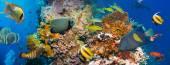 Tropical Anthias fish and shark