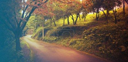 Photo pour Route à travers la forêt mixte verte. Image filtrée : effet vintage traité croisé chaud . - image libre de droit